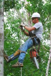 Tree service contractor climbing tree with harness
